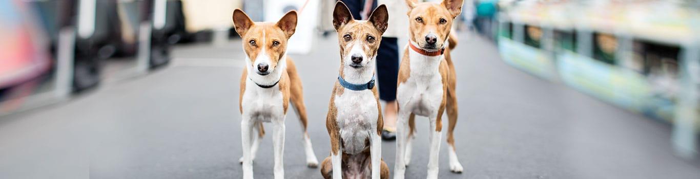 Benefits At Petsmart Careers At Petsmart Apply